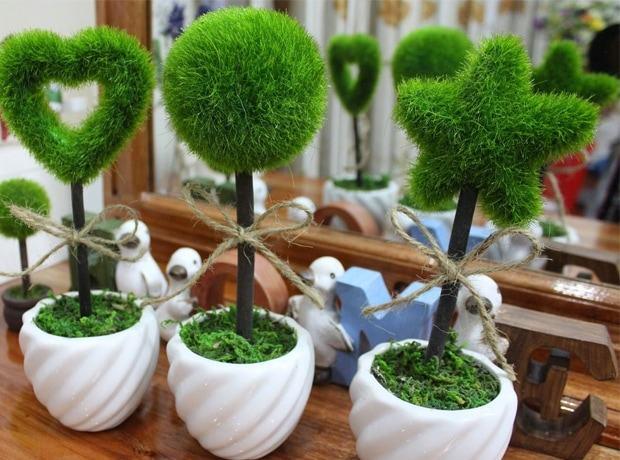 ý tưởng kinhh doanh độc đáo với chậu bonsai