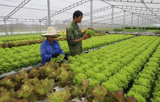 Công nghệ trồng rau sạch của Việt Nam tìm chỗ đứng tại Singapore - Báo Long An Online