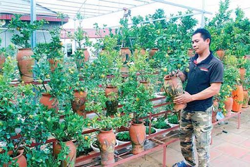 Cách làm giàu ở nông thôn với mô hình trồng hoa, cây cảnh