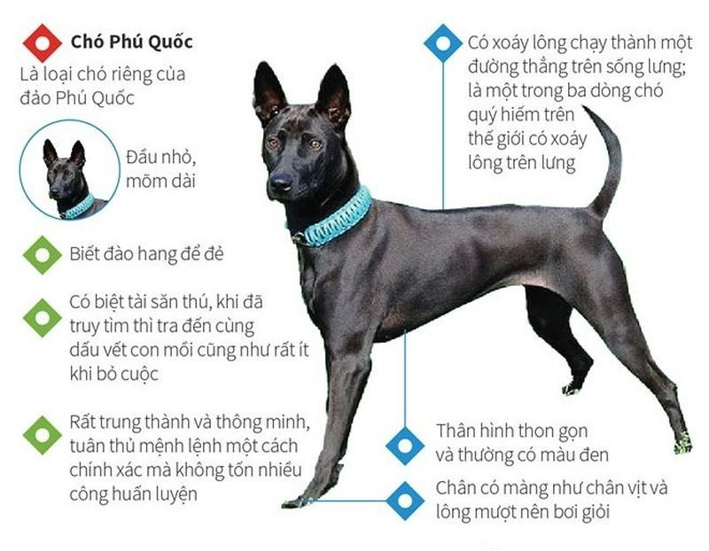 Các phương pháp, dấu hiệu nhận biết chó thông minh chính xác nhất