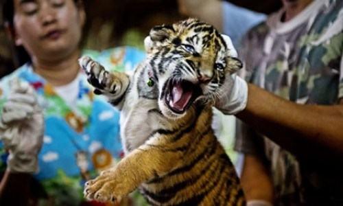Image result for buôn bán động vật